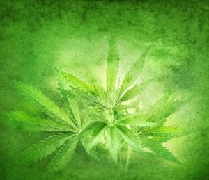 marijuana-green